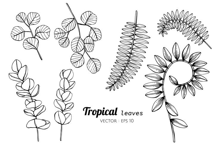 Collection set of Tropical leaves drawing illustration. vector
