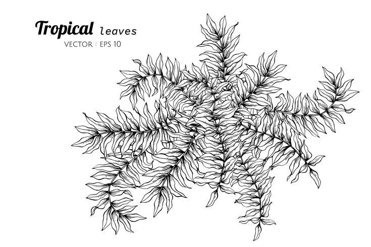 Tropische Blätter, die Illustration zeichnen.