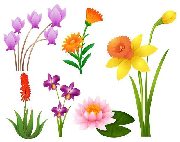 Diversi tipi di fiori tropicali