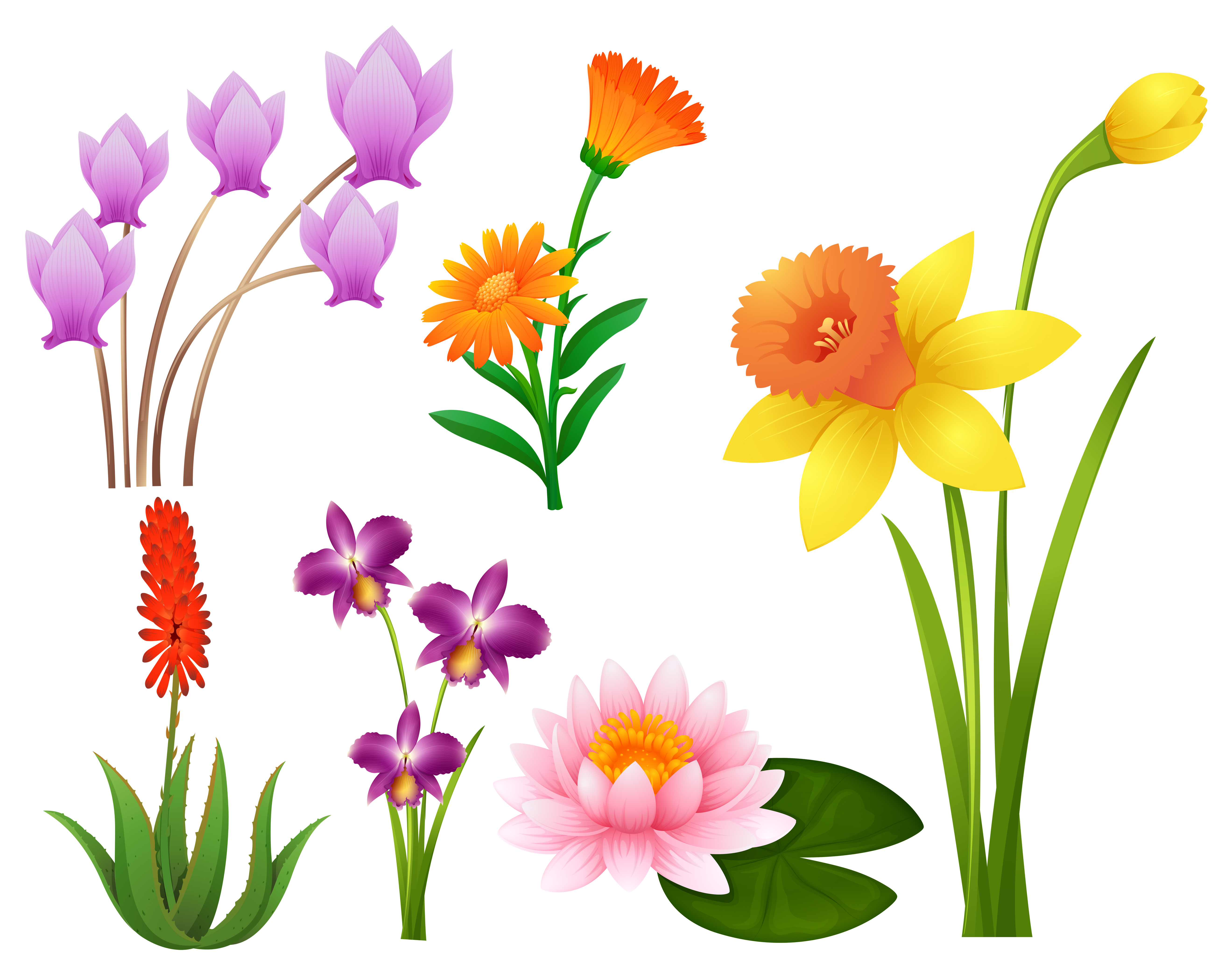Different kinds of tropical flowers - Download Free Vector ...