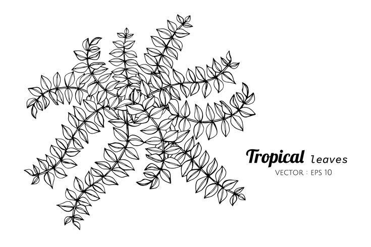 Tropical leaves drawing illustration.
