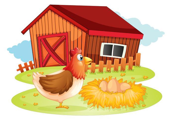 Una gallina y sus huevos en el patio trasero.