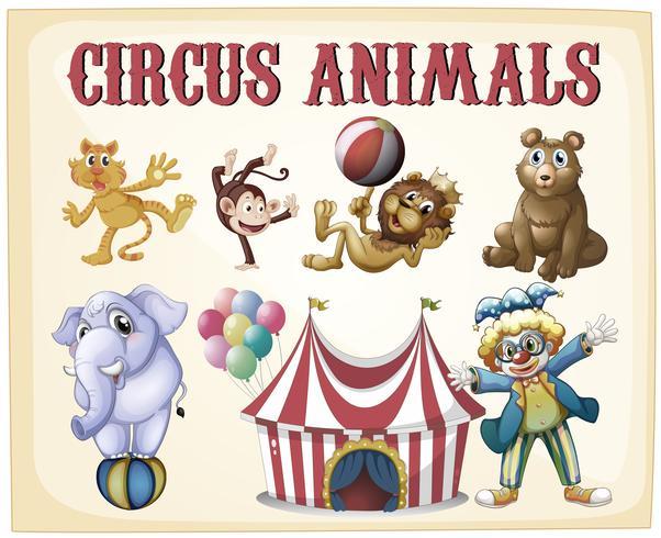 Cirkusdjur