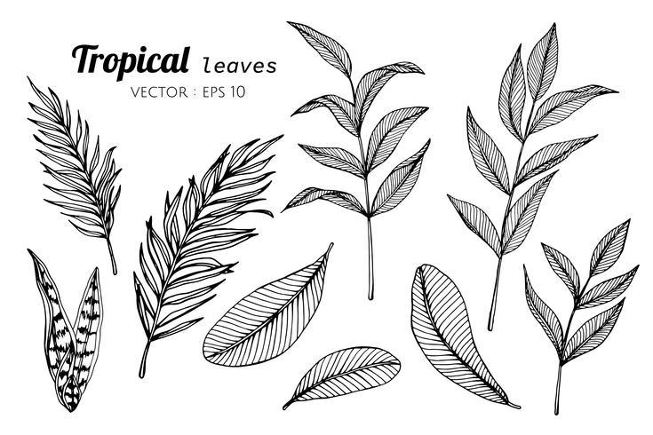 Samlingsuppsättning Tropiska löv ritning illustration.