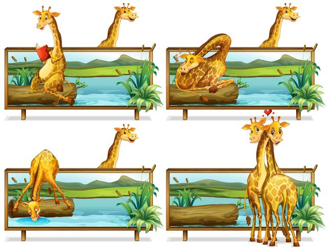 Giraffe nei telai di legno