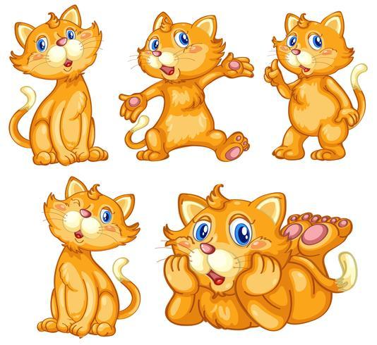 Conjunto de gato