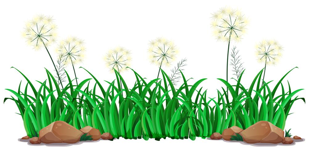 Geïsoleerd gras op witte achtergrond