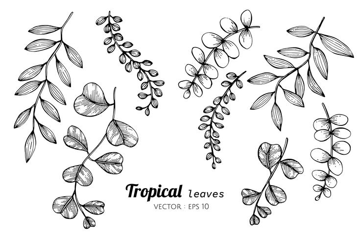 Collection Set Of Tropical Leaves Drawing Illustration Download Free Vectors Clipart Graphics Vector Art Posted in stock image » illustrations. tropical leaves drawing illustration