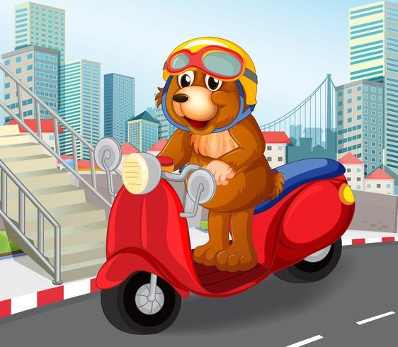 Oso montando motos en pueblo urbano.