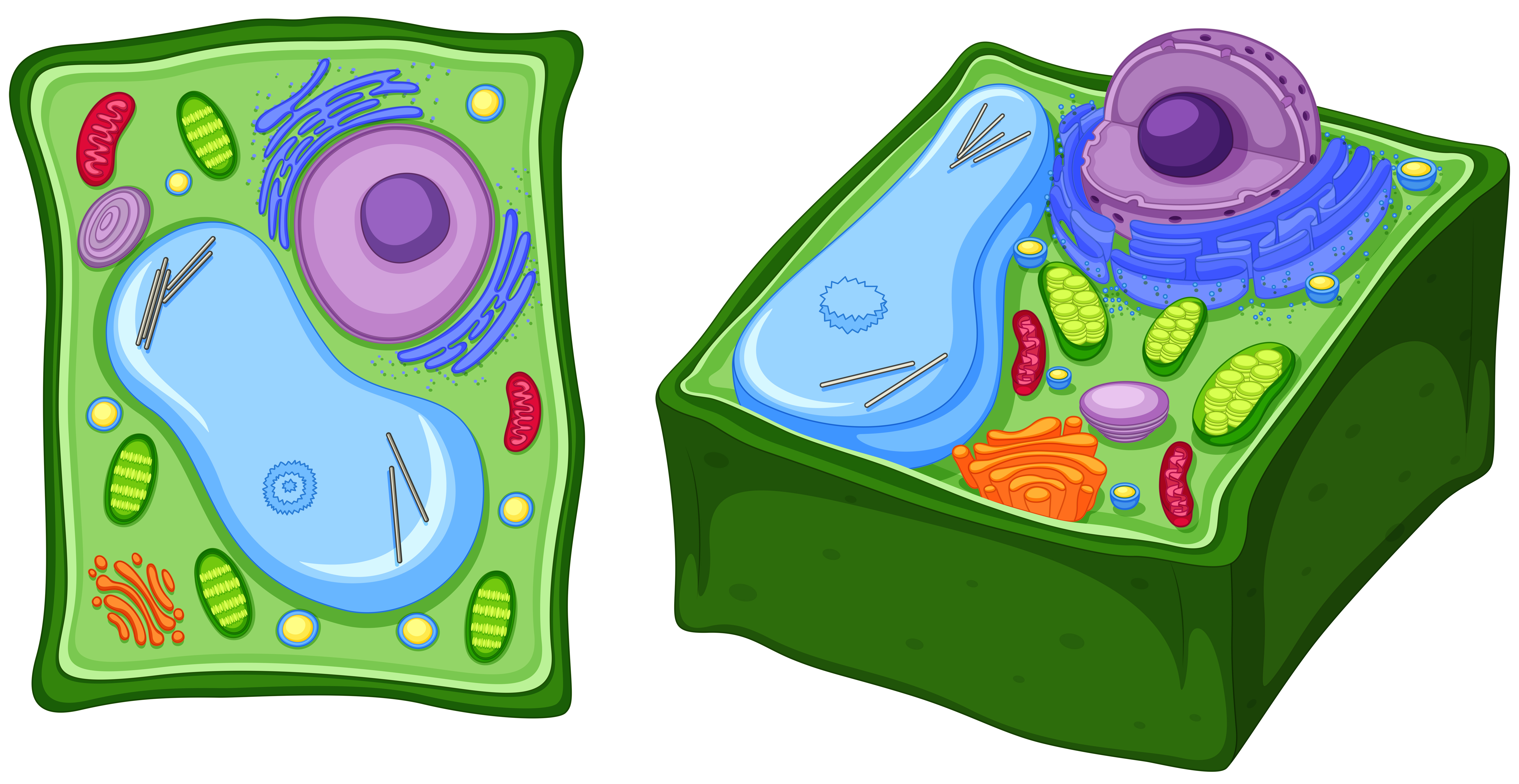 Close up diagram of plant cell - Download Free Vectors ...