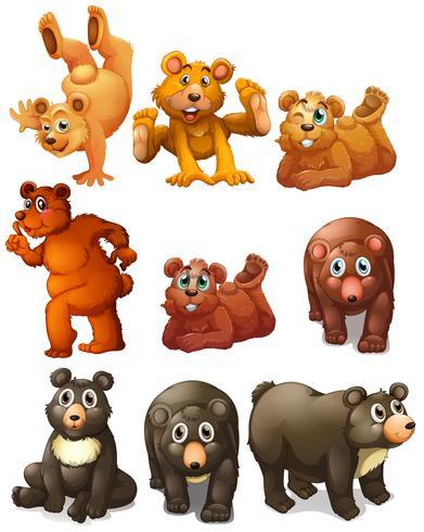 Söt björnrörelser