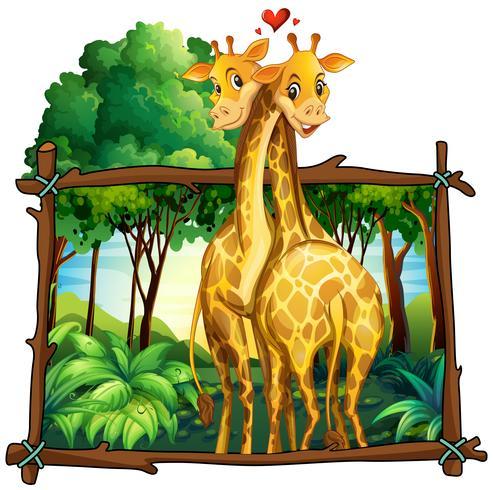 Dos jirafas abrazándose en la selva.
