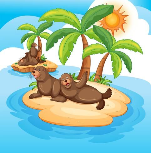 Seals living on island