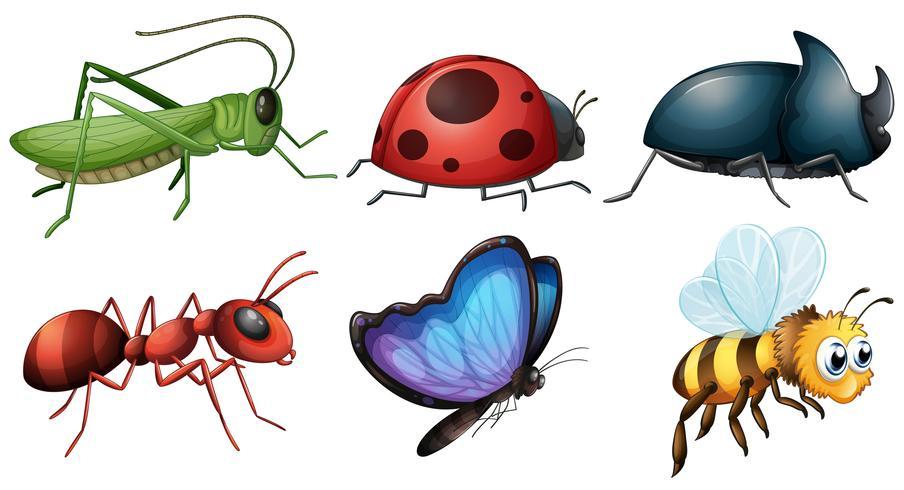 verschiedene Arten von Insekten