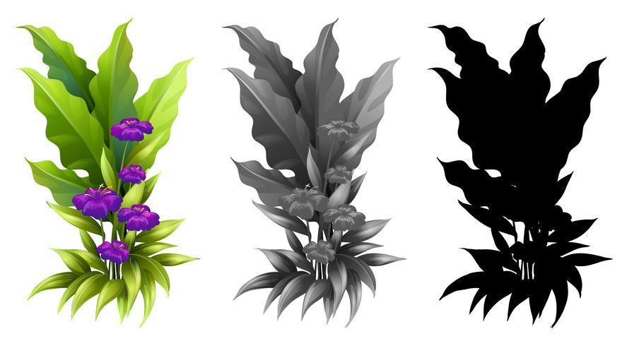 Ensemble de plantes à fleurs