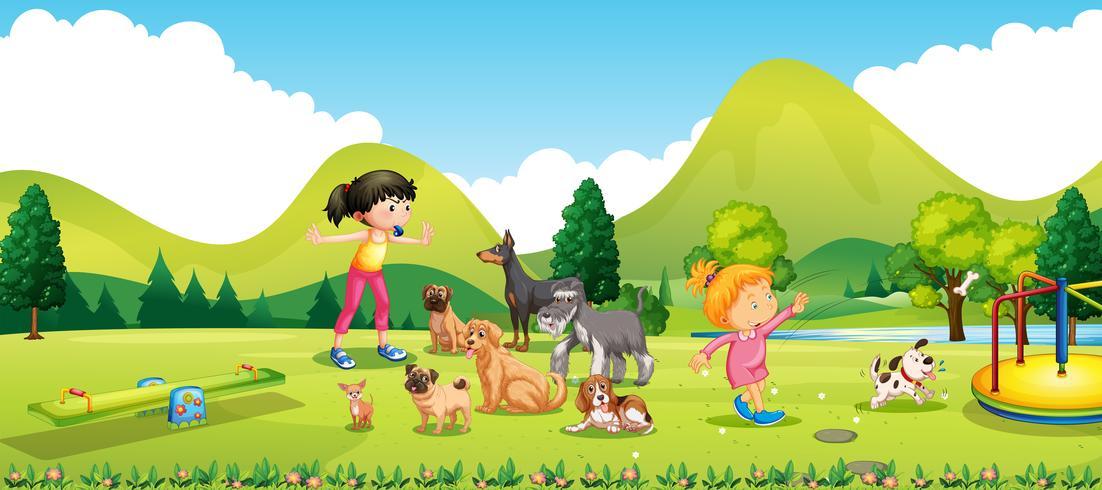 Junge Mädchen, die die Hunde ausbilden