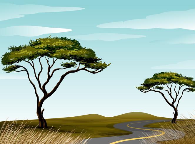 Strada attraverso il campo di savana
