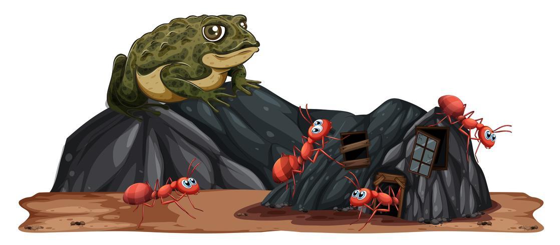 Crapaud regardant les fourmis