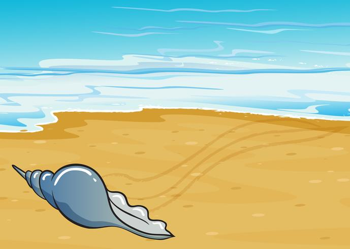 Uma concha à beira mar