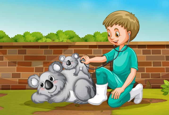 A Vet Taking Care of Coala