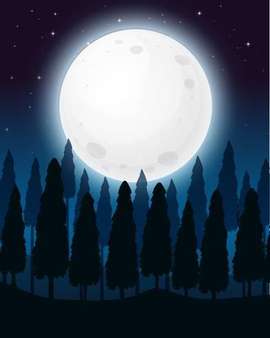 Ein Wald in der Vollmondnacht