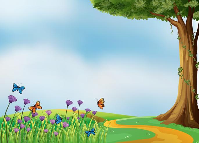 Farfalle e una natura bellissima
