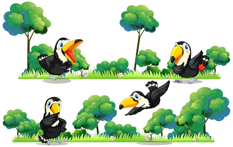 Toucans som flyger i trädgården