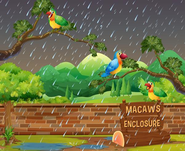 Happy Macaws im Zoo in der Nacht