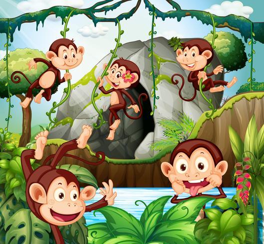 Apa hänger på vinstockar i skogen