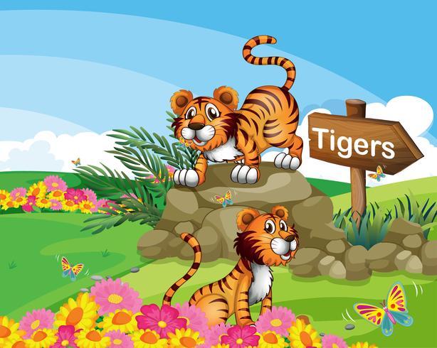 Två tigrar bredvid en skylt