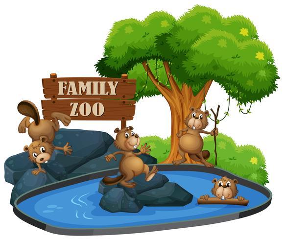 Beaver at the zoo