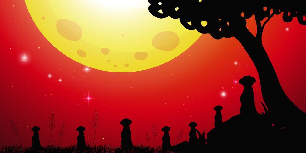 Silhouetscène met meerkats en rode hemel