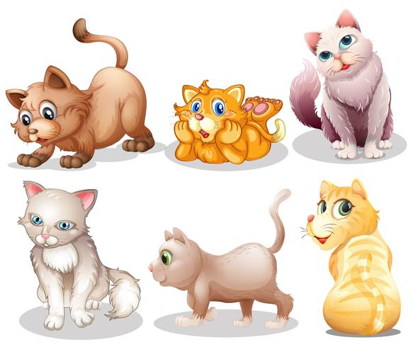 Playful cats vector