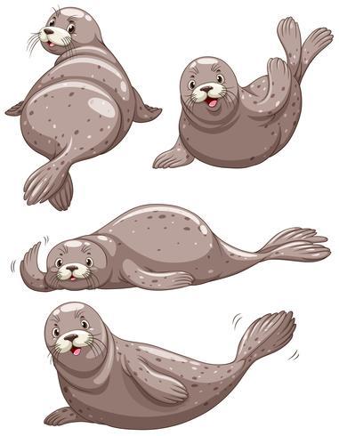 Cuatro focas con cara alegre.