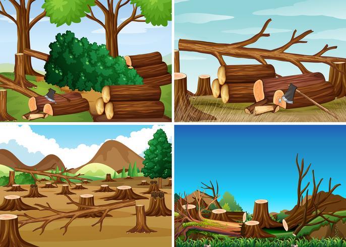 Escenas de deforestación con maderas cortadas.
