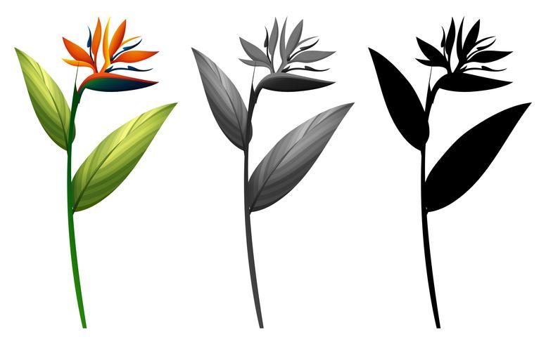 Set van exotische bloemen