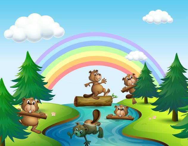 Beavers och loggar vid floden