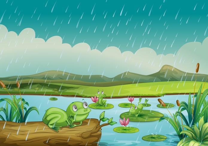 Três, rãs, desfrutando, a, pingos chuva