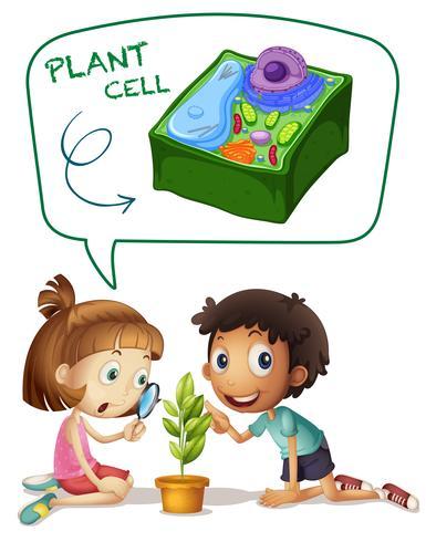 Pojke och tjej tittar på växtcell