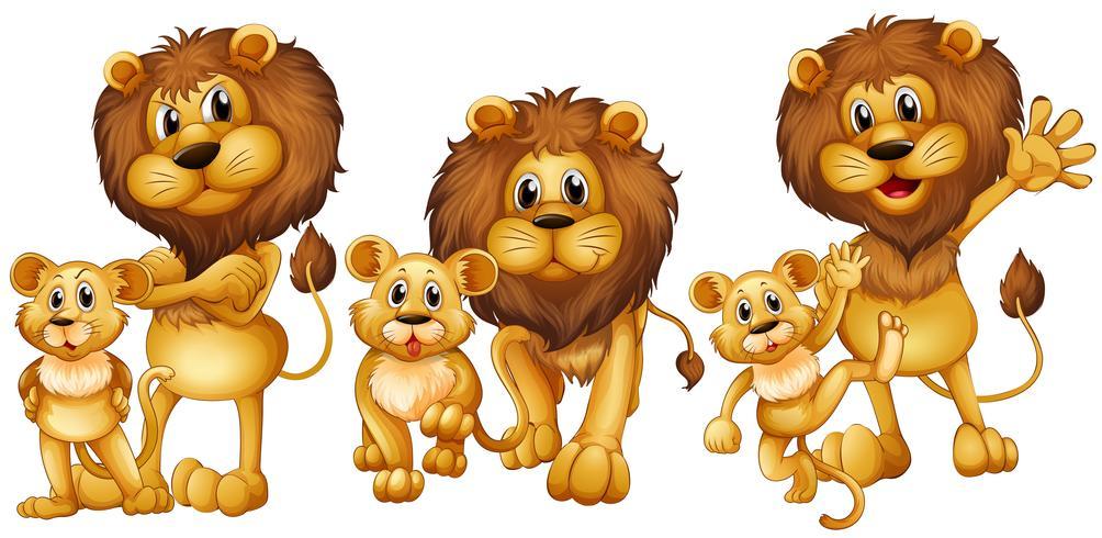 Leeuw en welp in drie acties