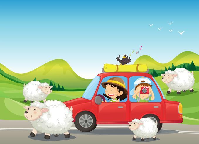 La macchina rossa e le pecore alla strada