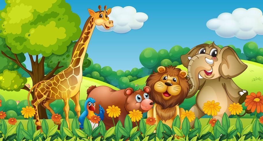 Animales salvajes en el bosque