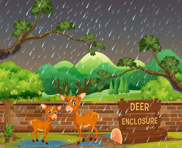 Two deers in the zoo on rainny day
