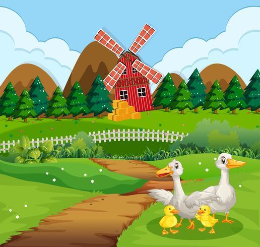 Familia de patos en tierras de cultivo