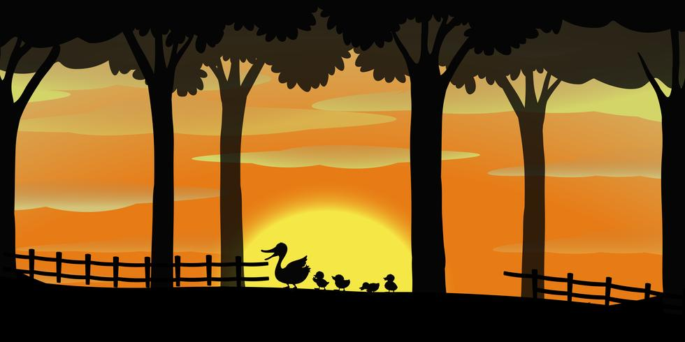 Silhouette background with ducks on the farm