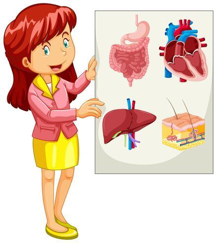 Mulher, apresentando, mapa, de, órgãos