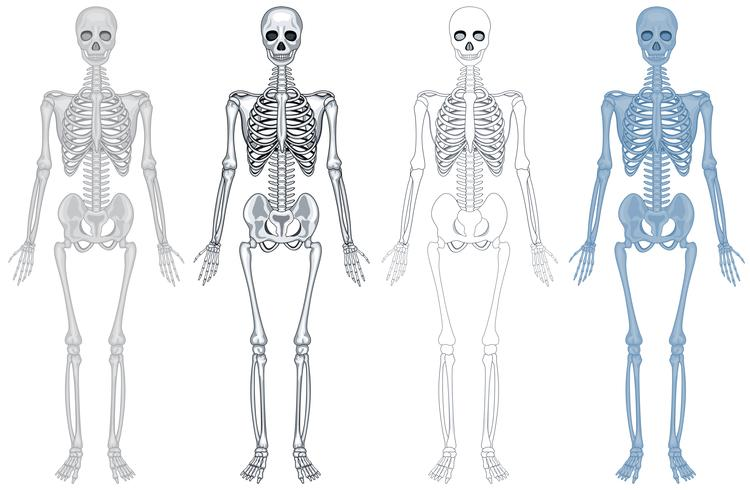 Schema diverso dello scheletro umano