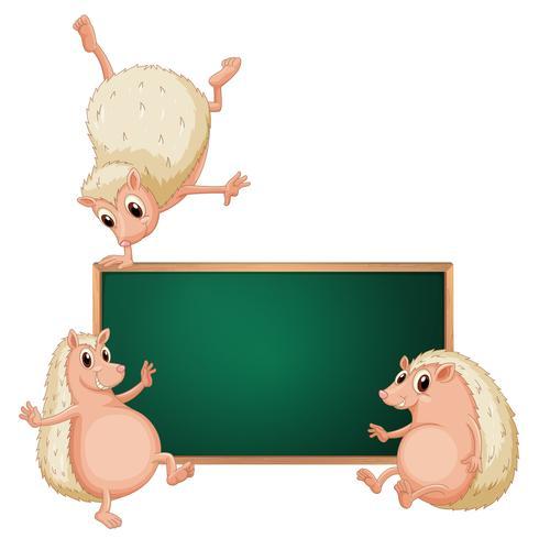 Egel en schoolbord op witte achtergrond