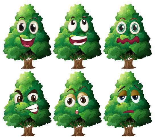 Expressão da árvore