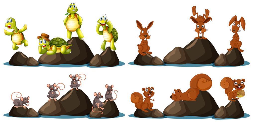 Um conjunto de animais na rocha